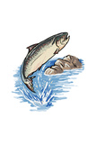 Silver Salmon - Icon Prints by  Lantern Press