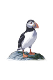 Puffin - Icon Posters by  Lantern Press