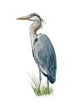 Blue Heron - Icon Prints by  Lantern Press