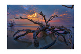 Driftwood and Sunset Prints by  Lantern Press