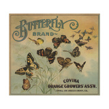 Butterfly Brand - Covina, California - Citrus Crate Label Premium Giclee Print by  Lantern Press