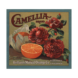 Camelia Brand - Redlands, California - Citrus Crate Label Print by  Lantern Press