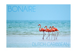 Bonaire, Dutch Caribbean - Flamingos and Ocean Prints by  Lantern Press