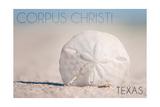 Corpus Christi, Texas - Sand Dollar and Beach Prints by  Lantern Press