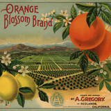 Orange Blossom Brand - Redlands, California - Citrus Crate Label Premium Giclee Print by  Lantern Press