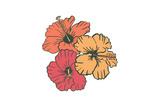 Hibiscus Flowers - Icon Prints by  Lantern Press