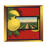 Grapefruit and Orchard - Citrus Crate Label Prints by  Lantern Press