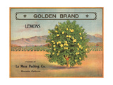 Golden Brand - Riverside, California - Citrus Crate Label Prints by  Lantern Press