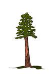 Redwood Tree - Icon Prints by  Lantern Press