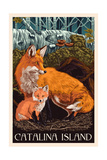 Catalina Island, California - Fox and Kit Posters by  Lantern Press
