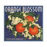 Orange Blossom Brand - Redlands, California - Citrus Crate Label Posters by  Lantern Press