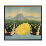 Grapefruit and Orchard - Citrus Crate Label Art by  Lantern Press