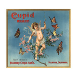 Cupid Brand - Fillmore, California - Citrus Crate Label Prints by  Lantern Press