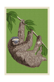 Three Toed Sloth - Letterpress Posters by  Lantern Press