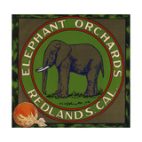 Elephant Orchards Brand - Redlands, California - Citrus Crate Label Premium Giclee Print by  Lantern Press