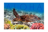 Sea Turtle and Coral - Aloha Poster by  Lantern Press