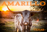 Amarillo, Texas - Longhorn and Sunset Prints by  Lantern Press
