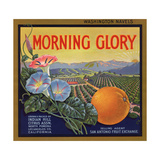 Morning Glory Brand - Pomona, California - Citrus Crate Label Print by  Lantern Press
