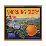 Morning Glory Brand - Pomona, California - Citrus Crate Label ポスター : ランターン・プレス