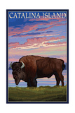 Catalina Island, California - Bison and Sunset Poster by  Lantern Press