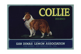 Collie Brand - San Dimas, California - Citrus Crate Label Posters by  Lantern Press