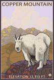 Copper Mountain, Colorado - Mountain Goat Solo Prints by  Lantern Press