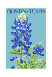Austin, Texas - Bluebonnet - Letterpress Prints by  Lantern Press