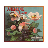 Anemone Brand - California - Citrus Crate Label Prints by  Lantern Press