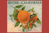 Irvine, California - Fruit Company Orange Label - Citrus Crate Label Posters by  Lantern Press