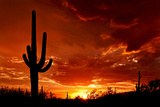 Red Sunset and Cactus Photograph Prints by  Lantern Press