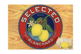 Selected Brand - Santa Paula, California - Citrus Crate Label Prints by  Lantern Press
