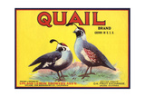 Quail Brand - Upland, California - Citrus Crate Label Art by  Lantern Press