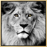Lion Framed Canvas Print