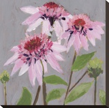 From My Garden - Echinacea Stretched Canvas Print by Charlotte Hardy