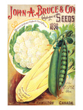 Bruce Seeds Hamilton Canada Prints by  Anonymous