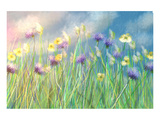 Cornflower Meadow Poster by Claire Westwood