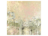 Cow Parsley softness Print by Claire Westwood