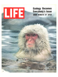 LIFE Japan Snow Monkey-Ecology Art by  Anonymous