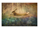 Giant Hare leaps Print by Claire Westwood