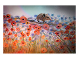 Little Shrew Poster by Claire Westwood