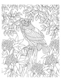 Forest Owl Coloring Art Prints by  Anonymous