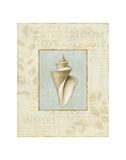 Soothing Words Shells III Print by Lisa Audit