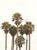 Amazing Palm Tree in Beverly Hills, California - USA Photographic Print by  elenaburn