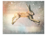 Winter Hare Print by Claire Westwood