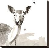 Cervi e alci  Stampa su tela di Philippe Debongnie