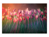 Tulips to attention Poster by Claire Westwood