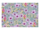 Spring blossom Print by Claire Westwood