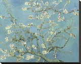 Almond Blossoms, 1890 Stretched Canvas Print by Vincent van Gogh