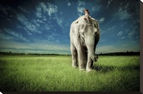 Elephant Carry Me Stretched Canvas Print by Jeff Madison