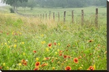 Flowers and Fence Stretched Canvas Print by Karin Connolly